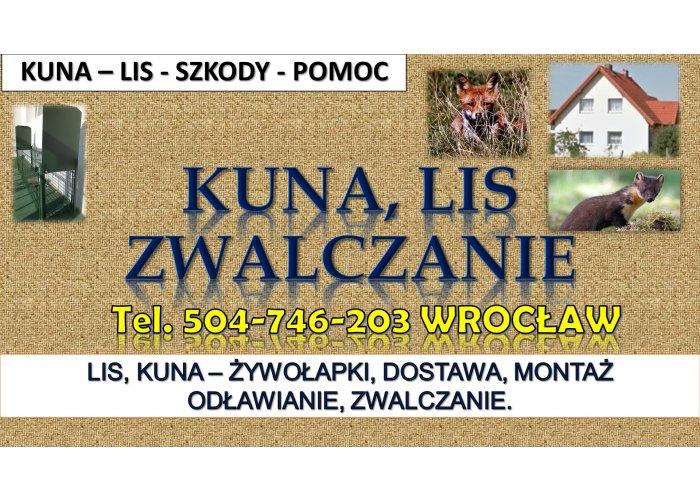 Odławianie lisów, cena, tel. 504-746-203, Wrocław. Żywołapka zwalczanie kuny