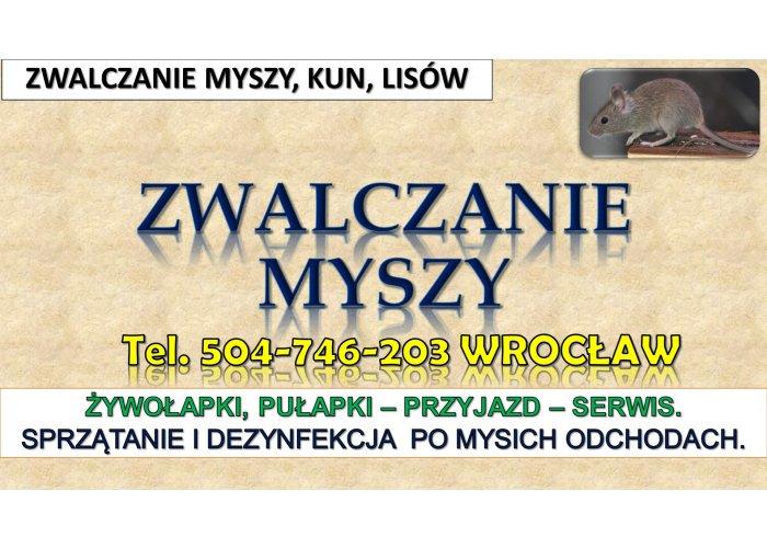 Zwalczanie myszy, Wrocław. tel. 504-746-203 Likwidacja szkodników w domu. Pułap