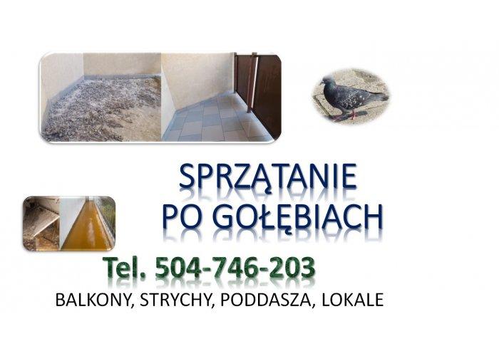 Dezynfekcja po gołębiach, tel. 504-746-203, Wrocław. Sprzątanie balkonu, strychu