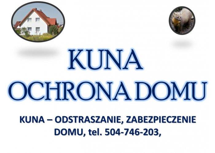 Odławianie kun, tel. 504-746-203. Skuteczny sposób na kunę na dachu